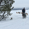 Dogsledding West Yellowstone