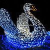 "Swan, ""Wild Lights"", St Louis Zoo,"
