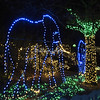 "Elephants,  ""Wild Lights"", St Louis Zoo"