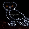 "Owl, ""Wild Lights"", St Louis Zoo"