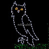 "Horned Owl, ""Wild Lights"", St Louis Zoo"
