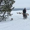 Dogsledding West Yellowstone