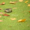 Warbler on Leaf
