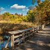 Boardwalk across the wetland, New York Botanical Gardens, New York City