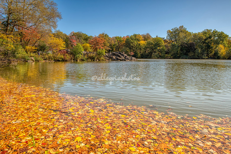 Autumn leaves in and across the lake, Central Park, New York City