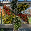 Chrysanthemum display, New York Botanical Garden, New York City