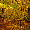 Autumnal forest, New York Botanical Gardens, New York City