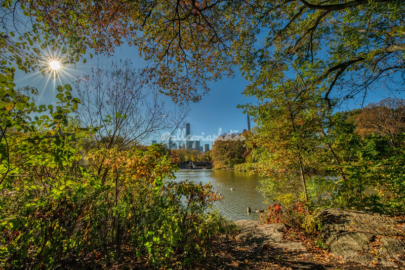 Autumnal sun and colors, Central Park, New York City