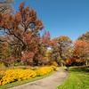 Path through the autumn trees, New York Botanical Garden, New York City