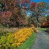 Pathway through autumn, New York Botanical Gardens, New York City