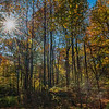 Sunstar through the autumn leaves, New York Botanical Gardens, New York City