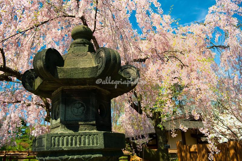 Japanese Pond and Hill Garden, Brooklyn Botanical Garden, New York