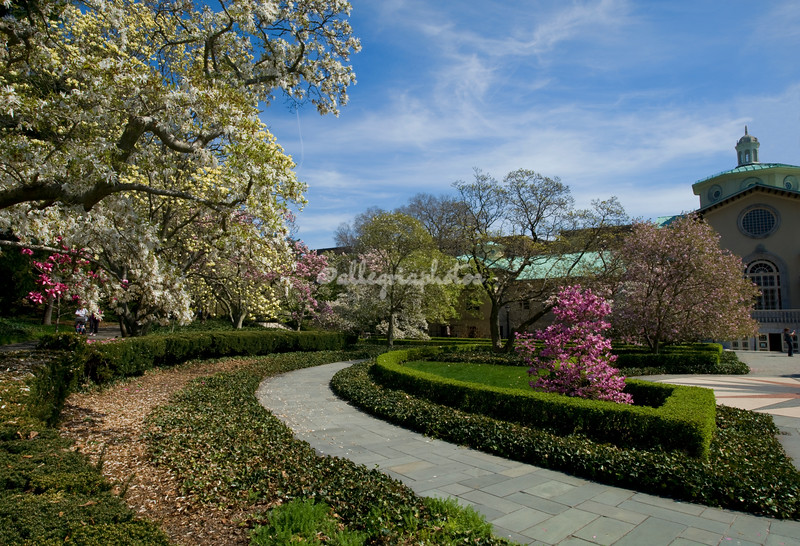 Magnolia corner, Brooklyn Botanical Garden, New York