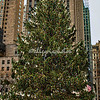 Christmas Tree, Rockefeller Plaza, New York