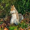 Squirrel, Riverside Park, New York City
