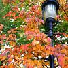 Autumn leaves, Snug Harbor, Staten Island