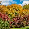 Autumn foliage, Snug Harbor, Staten Island, New York City
