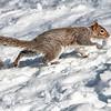 Tree Squirre,  Riverside Park, Upper West Side, Manhattan, New York City