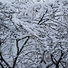 Snow encrusted trees in Riverside Park, New York City