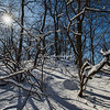 A Sun-star through the snowy trees, Central Park