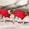 Canine Hiking Gear in  CentralPark