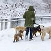 Walking dogs in the blizzard