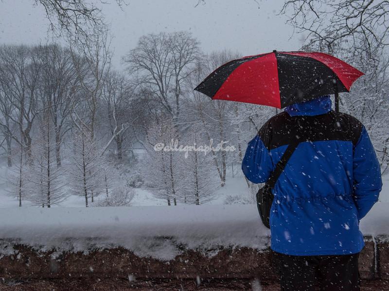 Snow falls in Riverside Park, New York City