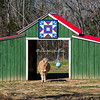 A small horse exits a barn decorated with a quilt in Benton County, Tennessee.