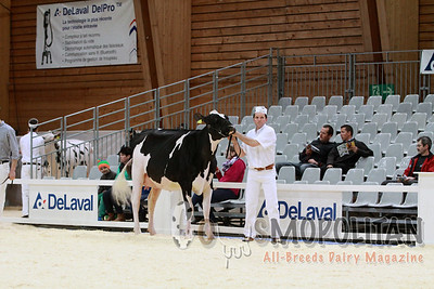 Expo Bulle Holstein Junior Cow