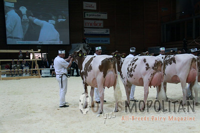 Expo Bulle Red Holstein Jr Cow