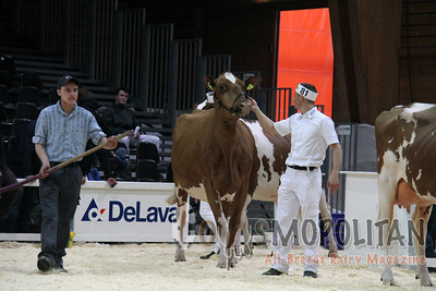 Expo Bulle Red Holstein Sr Cows