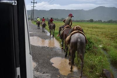 caballos al lado de la guagua