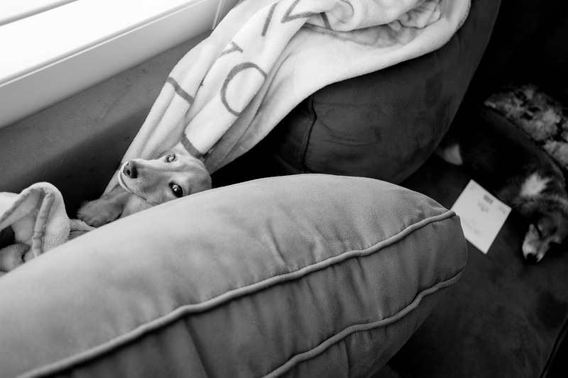 skittles fell into the cushion crevasse