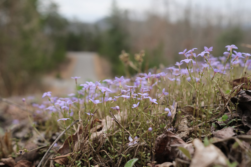 purple flowers and road