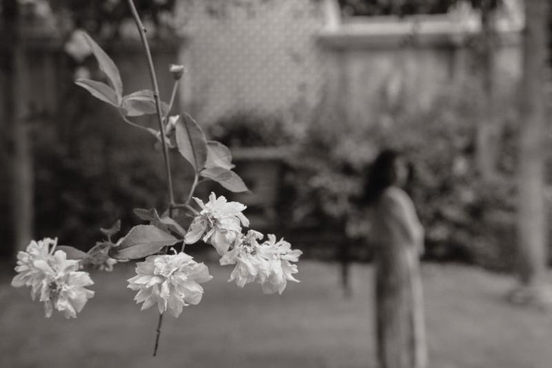a walk thru the gardens