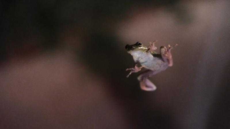 frog on the window