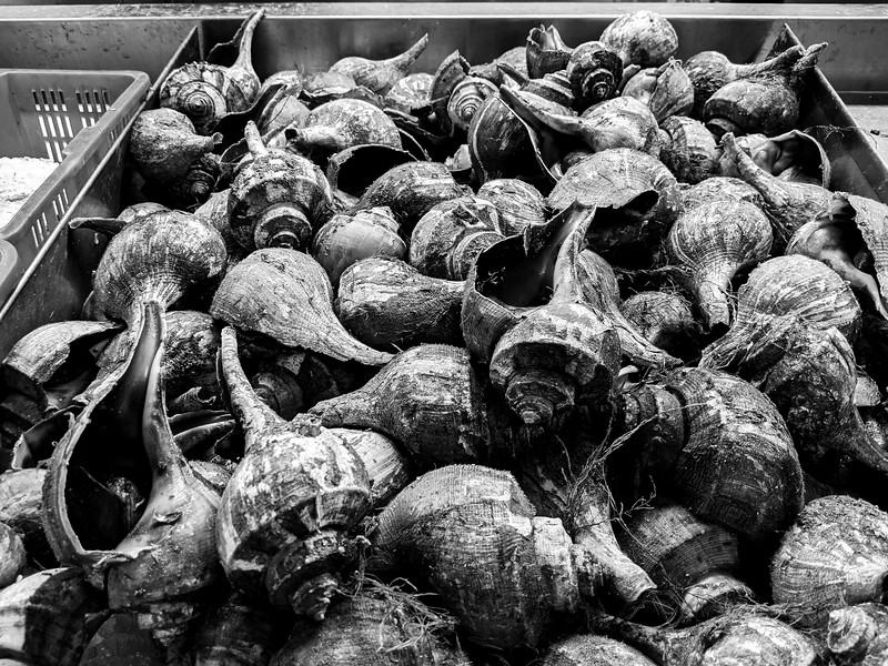 shells at red pearl market