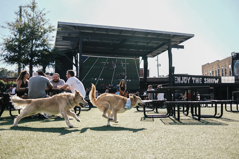 running dogs at avondale brewery