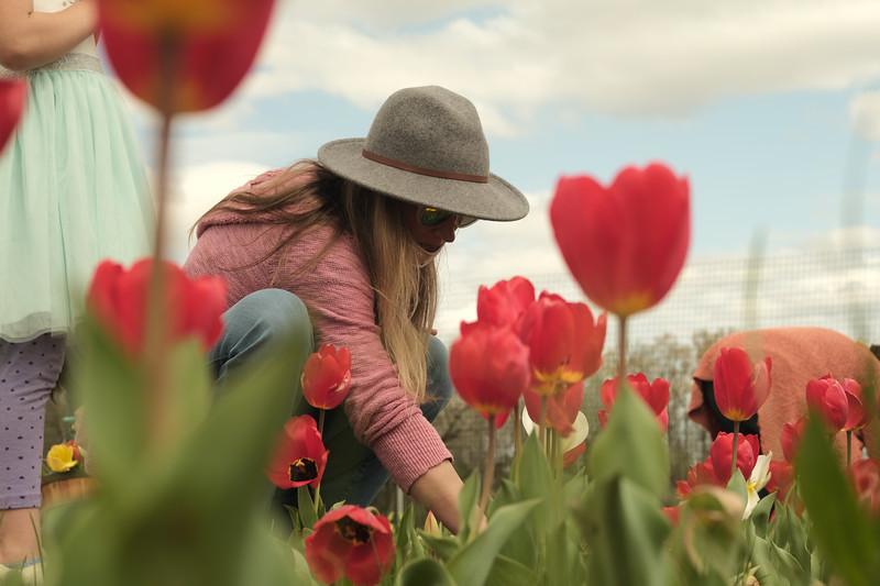 Picking Tulips in Montevallo's American Village