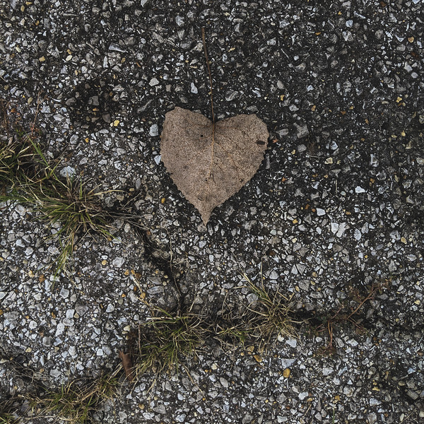the girls found a heart-shaped leaf on the pavement