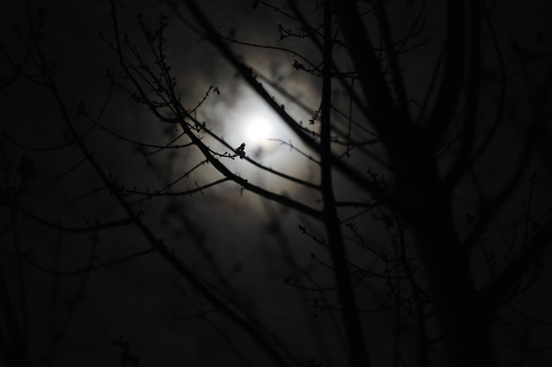 moon behind tree