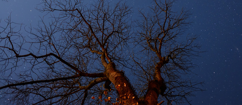 Astrotree