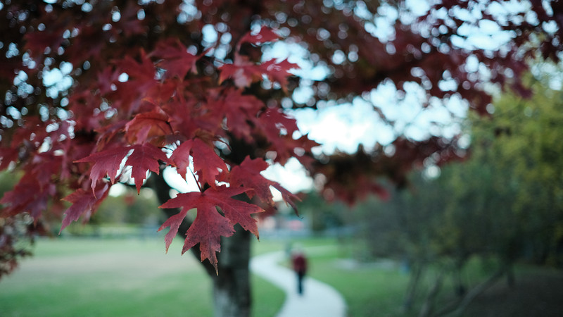 Shades of Red in the Park