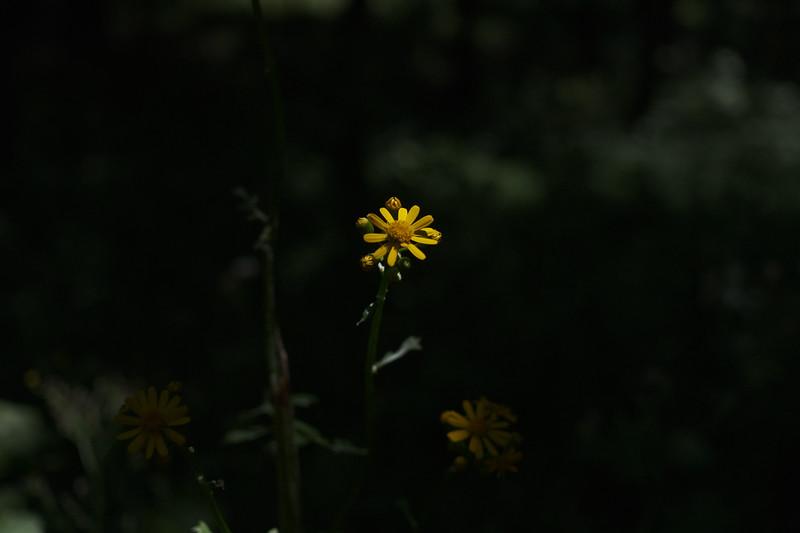 dayhike with lyla, willow, and larkin