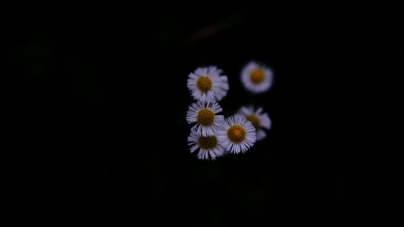 velvia flower