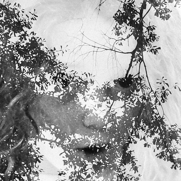 double exposure of willow and trees