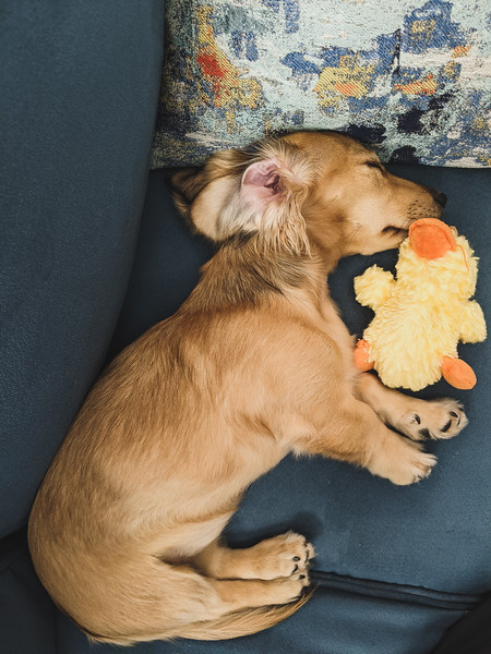 skittles naps with ducky