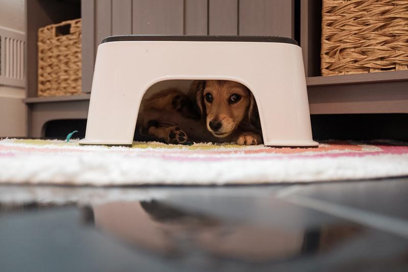 skittles under the step stool