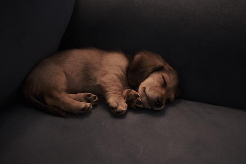 skittles sleeps