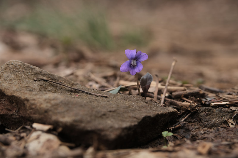 the purple flower. alone.